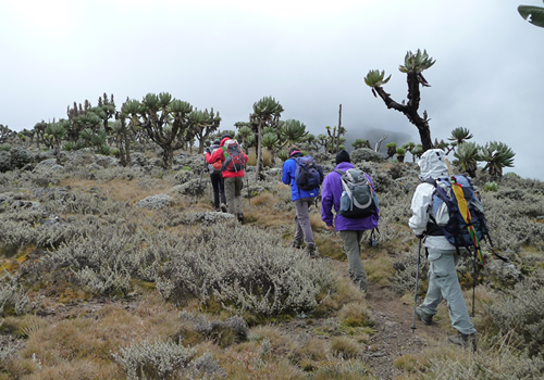 Mt Elgon Hiking